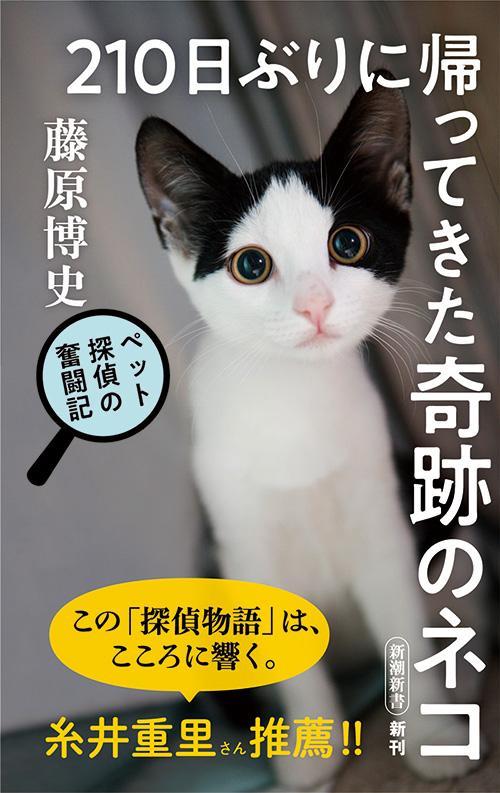 どうか 猫 な 怪しい か も